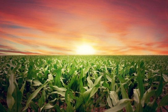 Sunset-Farm-Crops-Field